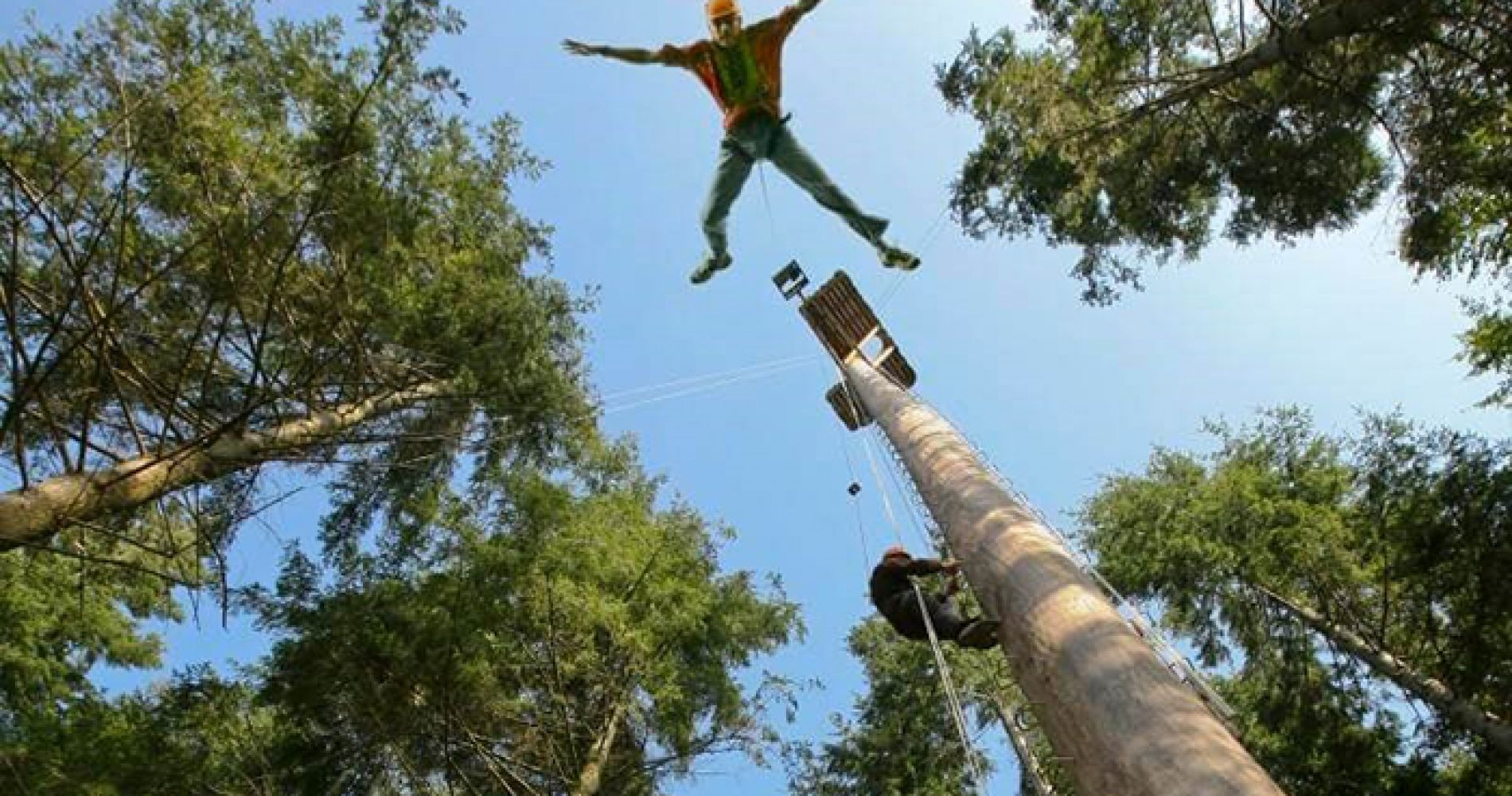 Bungee jump in a Giant Redwood Forest