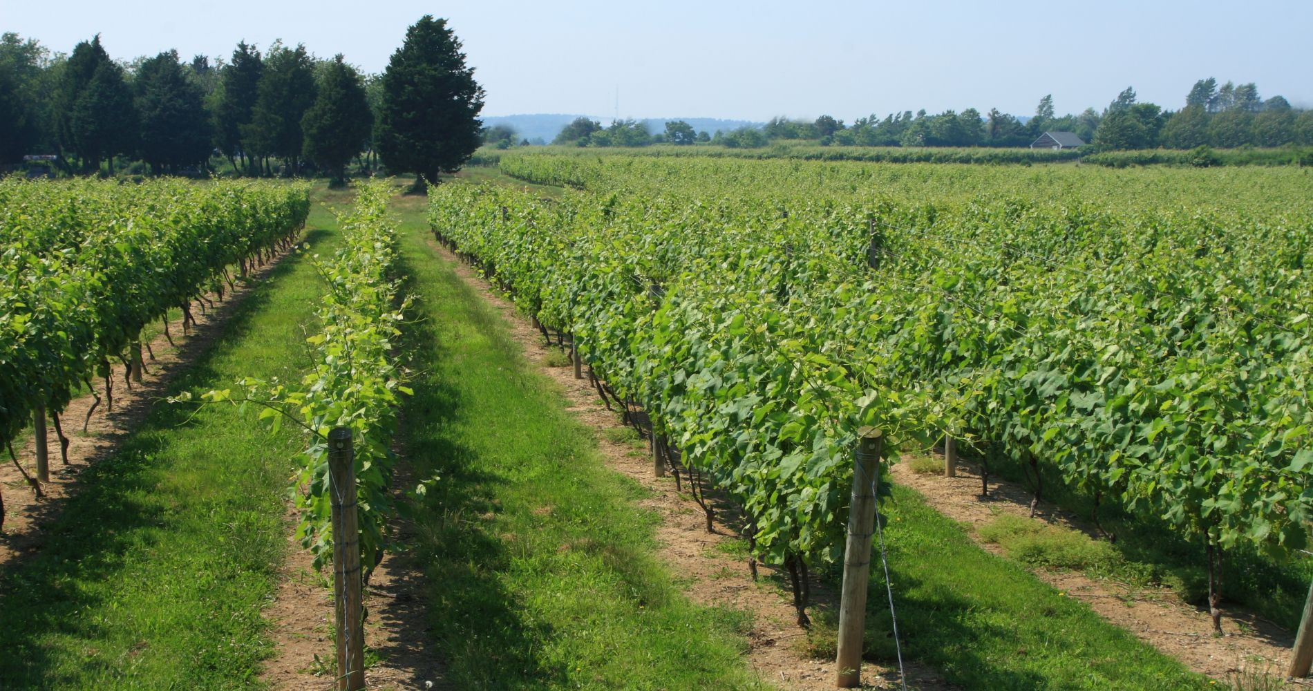 Long Island Wine Experience from New York