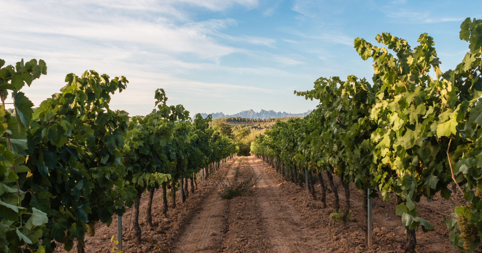 4x4 Winery Tour with Tapas & Wine Tasting from Barcelona for Two