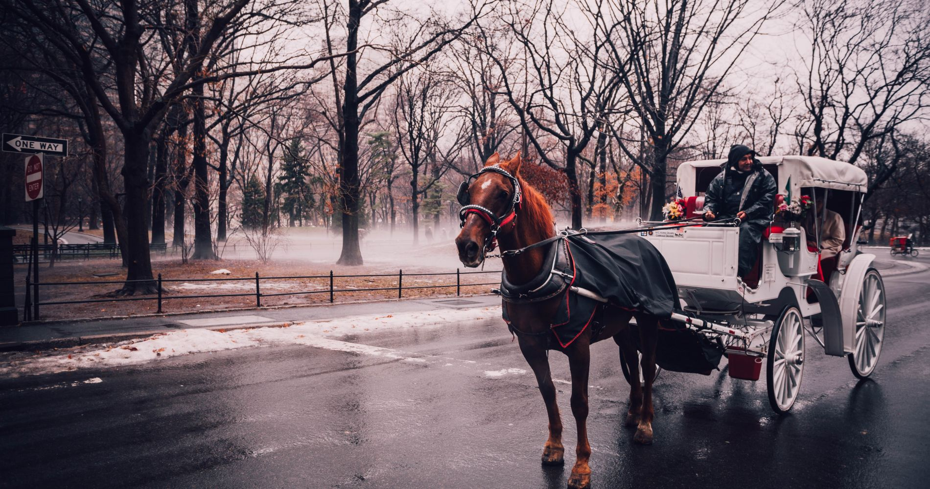 New York City Horse-Drawn Carriage Ride