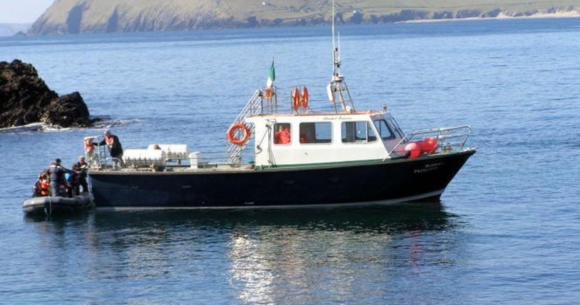 Dolphin and Whale Watching Tour from Dingle