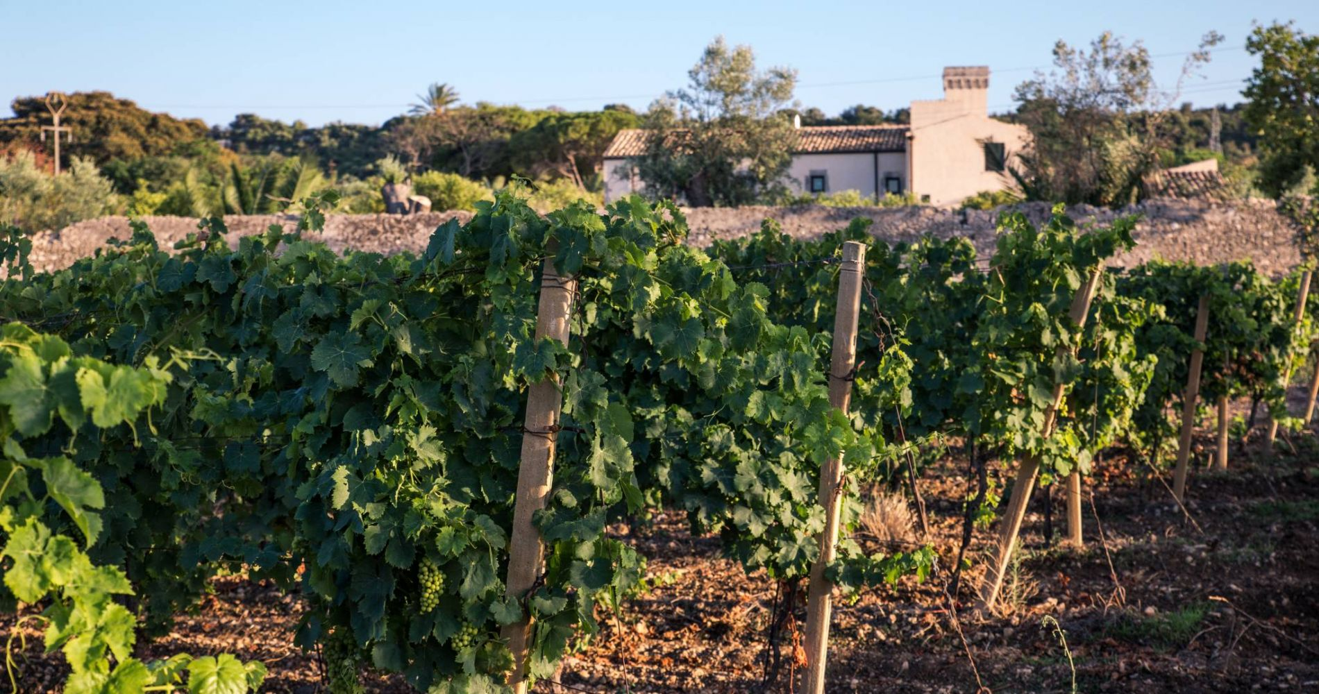 Wine Tasting at Sicilian Winery for Two