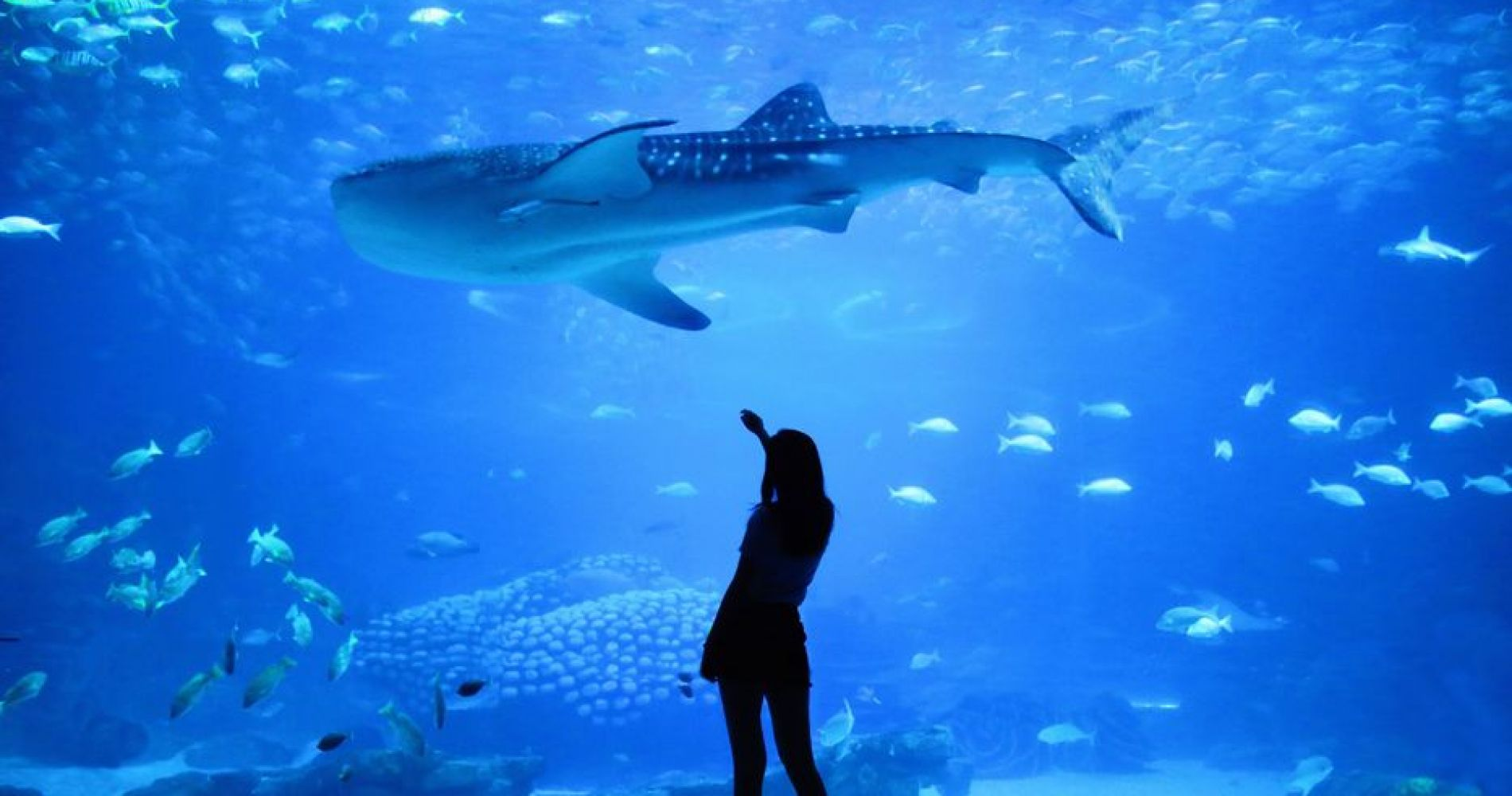 Parent and Child day at Winelands and Aquarium in Cape Town