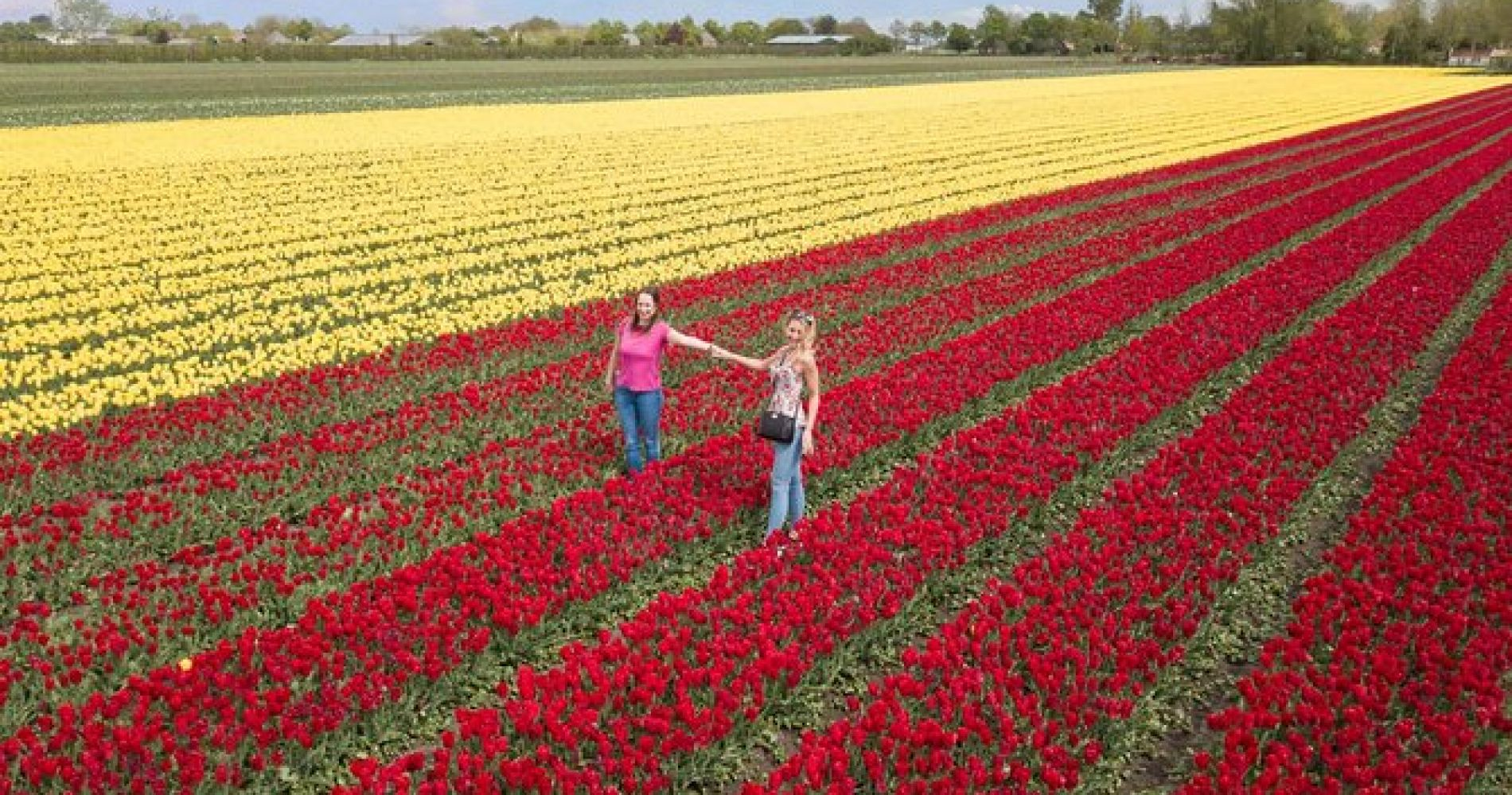 Tulip Tour and Windmills from Amsterdam - Incl Lunch + Tulip Farm