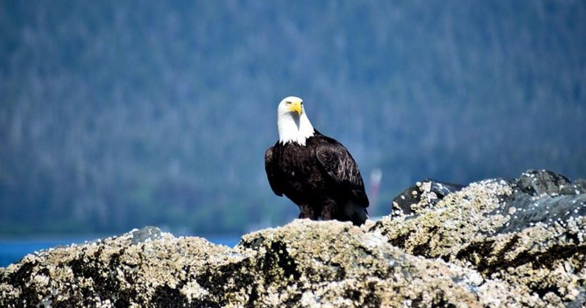 Simply Amazing Sitka Tour: Fortress of the Bear, Alaska Raptor, & Totems