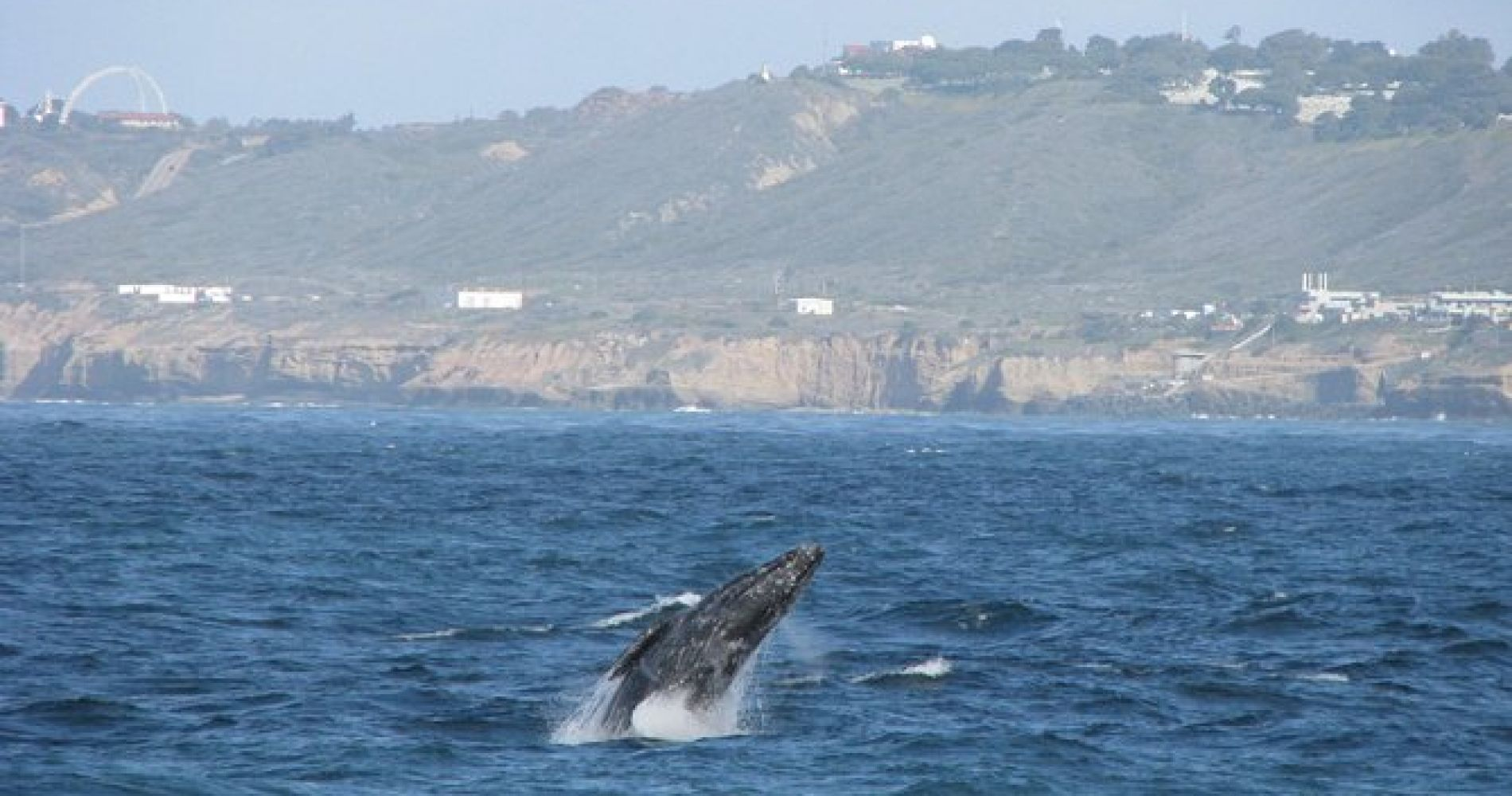 San Diego Whale Watching Cruise with Birch Aquarium Guides