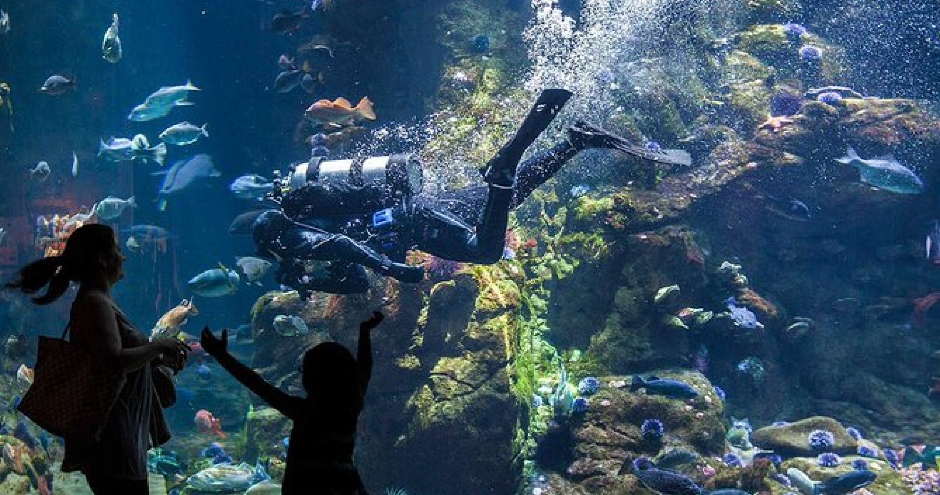 San Francisco's Best Museums including California Academy of Sciences for Two