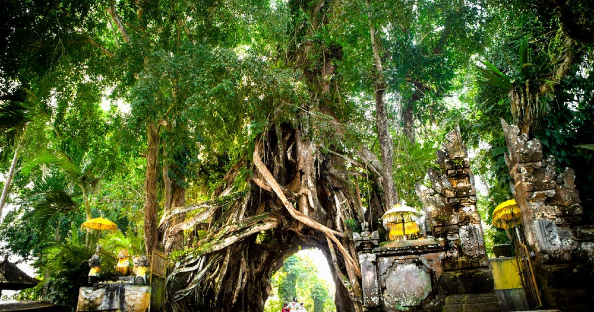 Drive (or no) through a hole in a tree - Bunut Bolong Tree in Bali