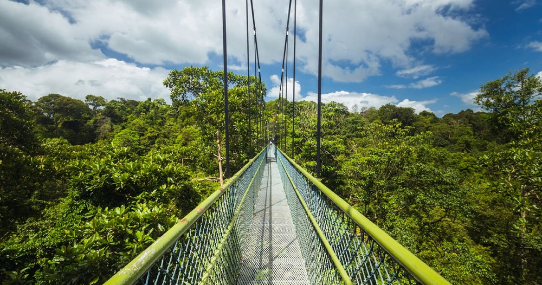Walk The TreeTop Walk at MacRitchie Reservoir in Singapore