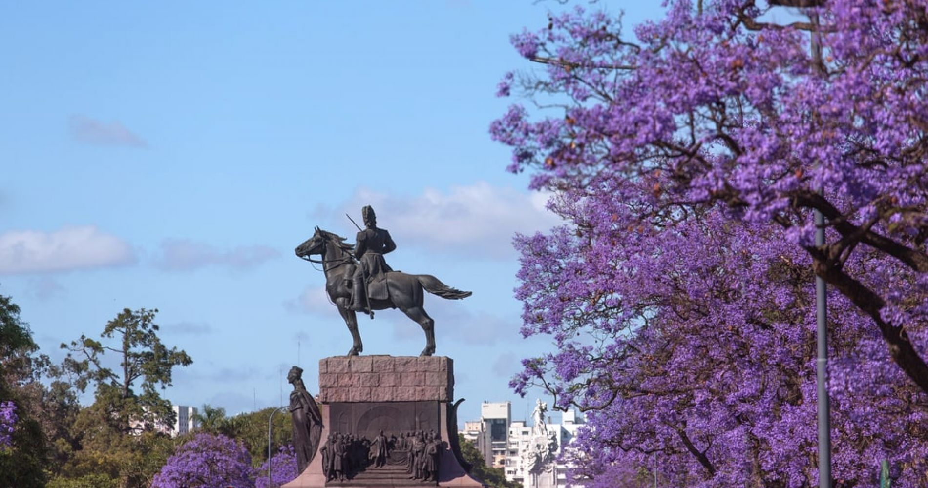 See the purple Jacaranda trees blooming in Buenos Aires