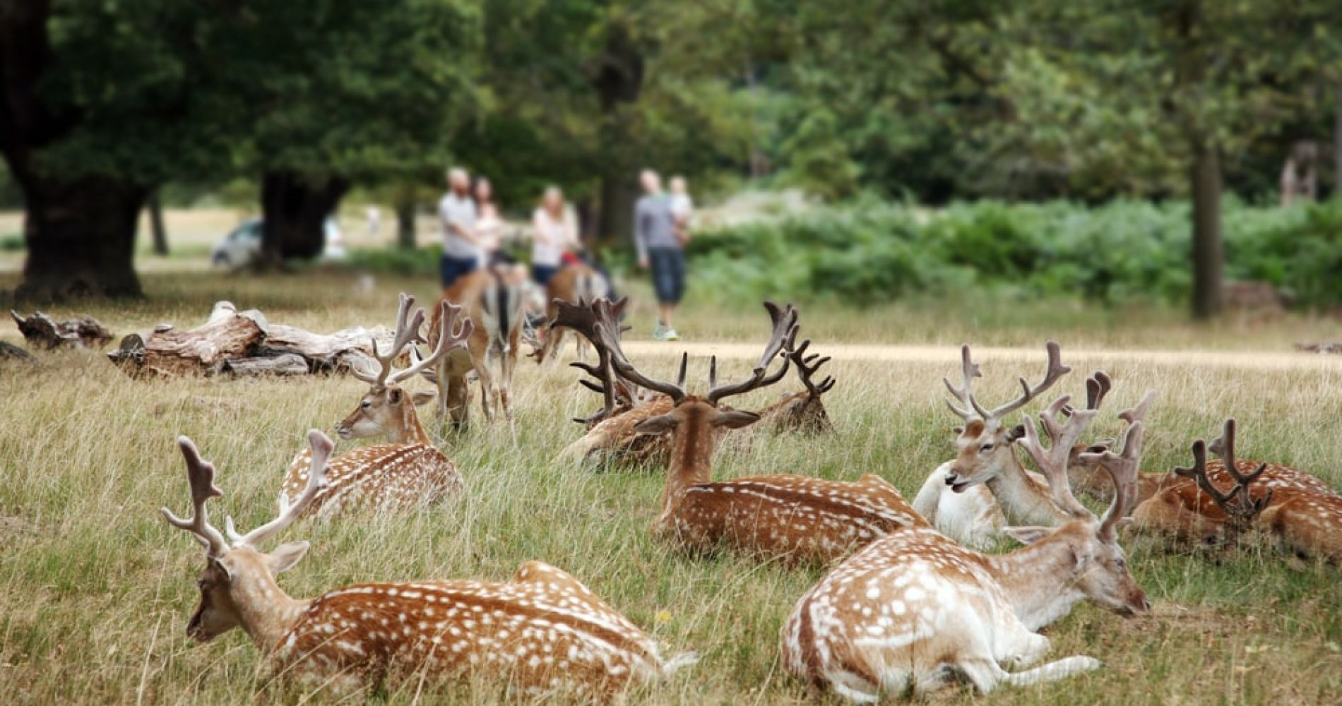 Head to Richmond Park in London