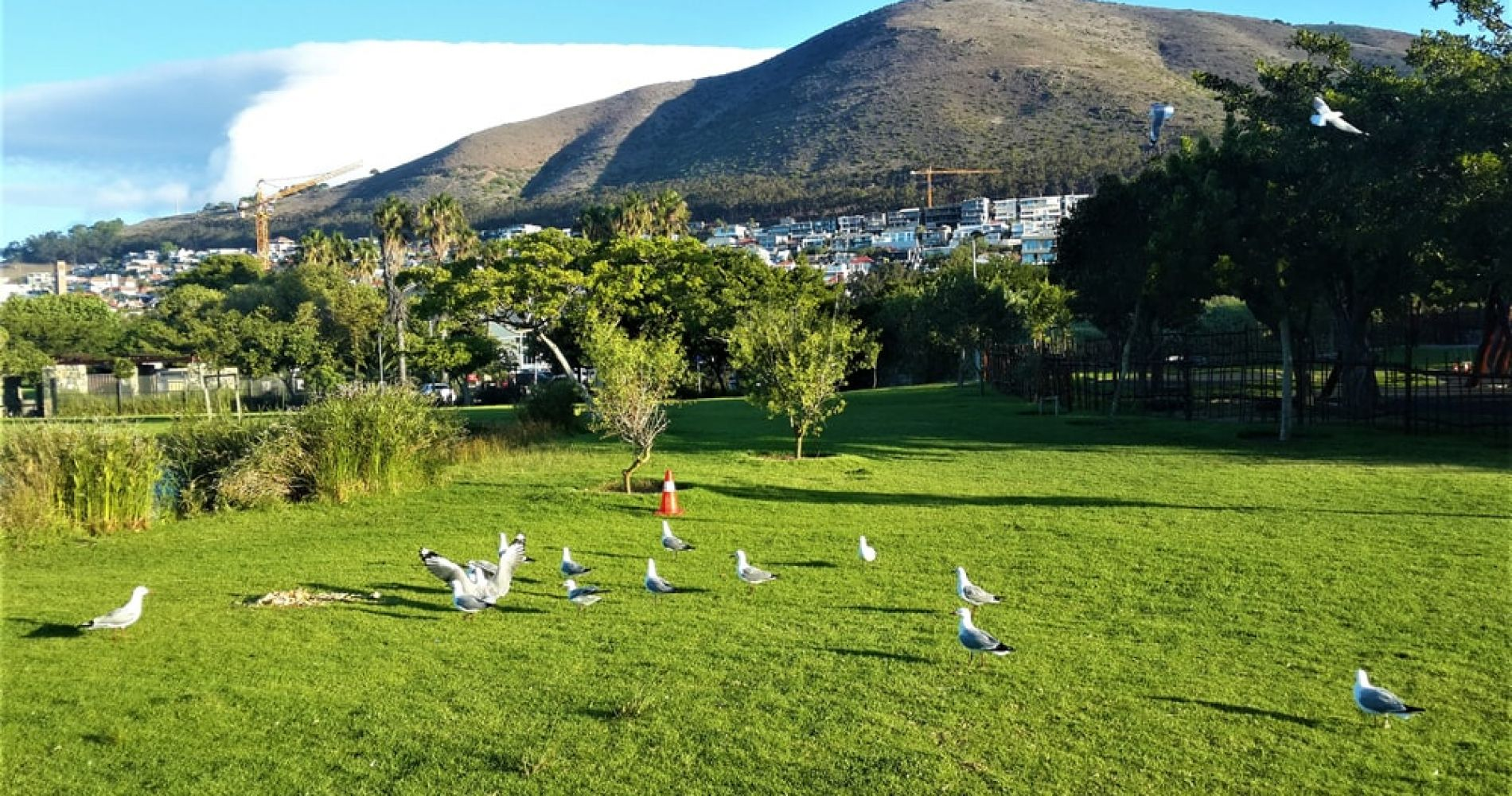 Spend an Afternoon in the Green Point Urban Park in Cape Town