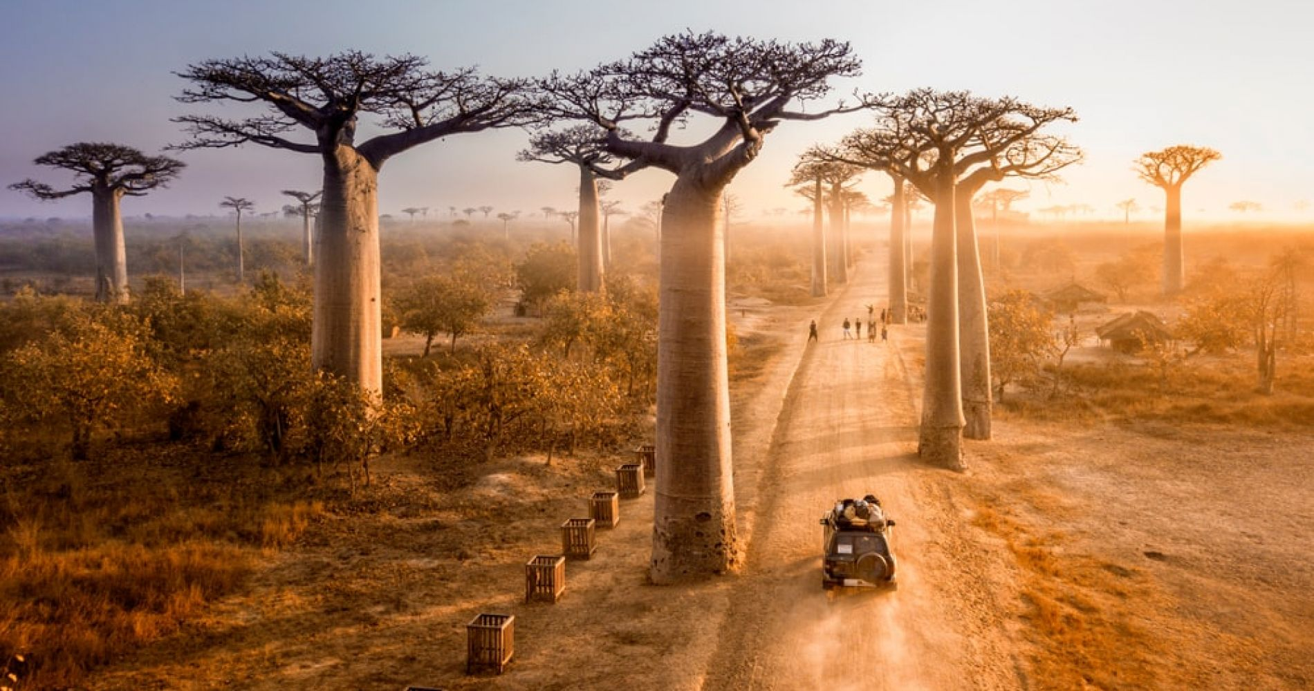 See the Avenue of the Baobabs in Madagascar