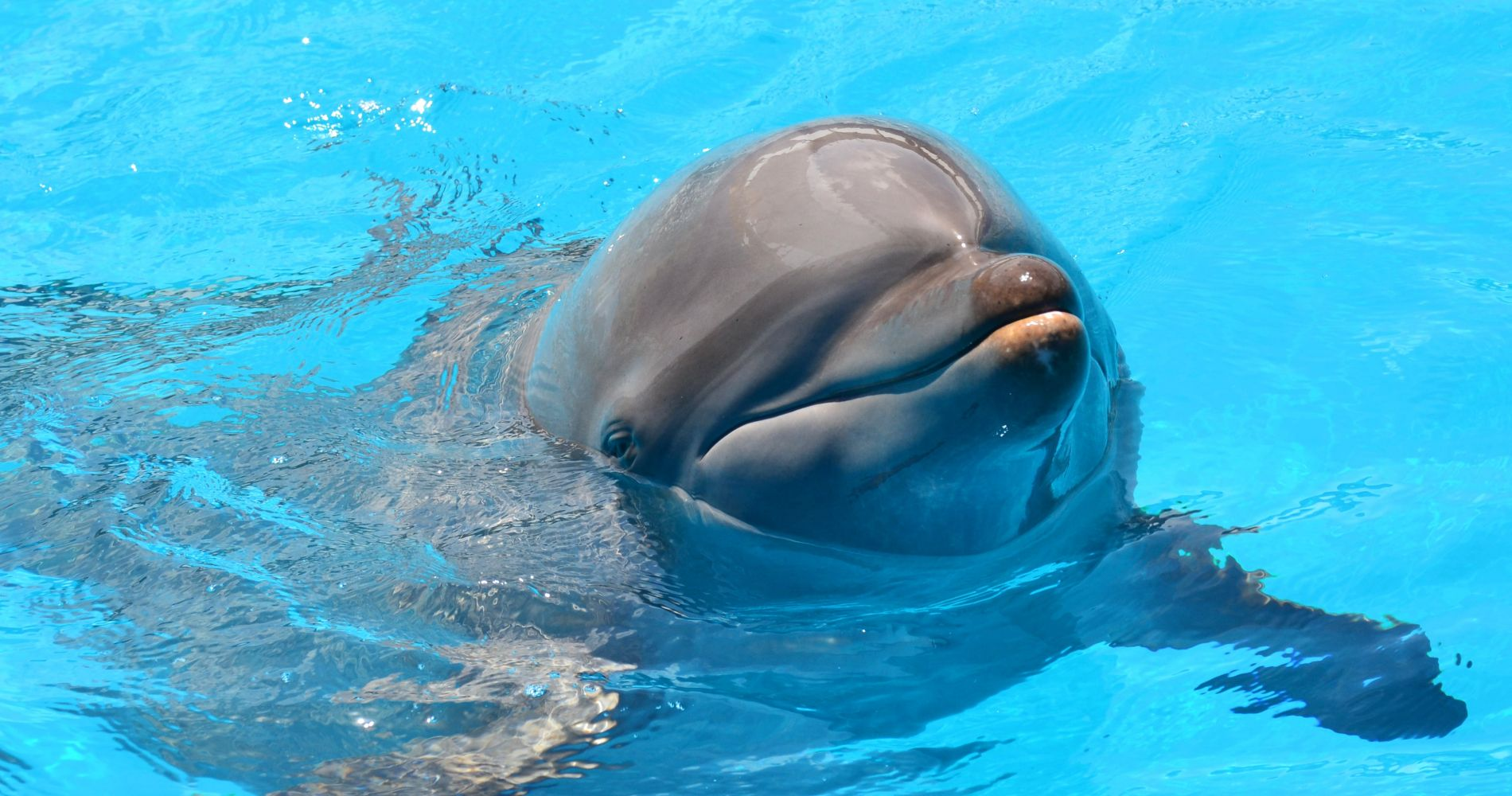 Miami Seaquarium and 3 other attractions