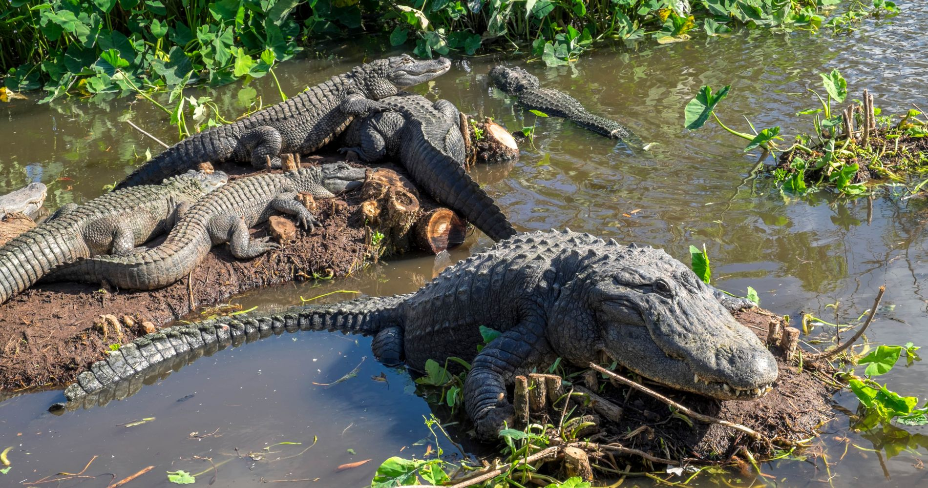 Visit Gatorland - The Alligator Capital of the World and other Attractions