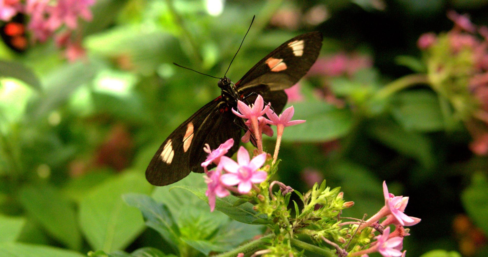 Audubon Butterfly Garden and Insectarium with New Orleans Pass