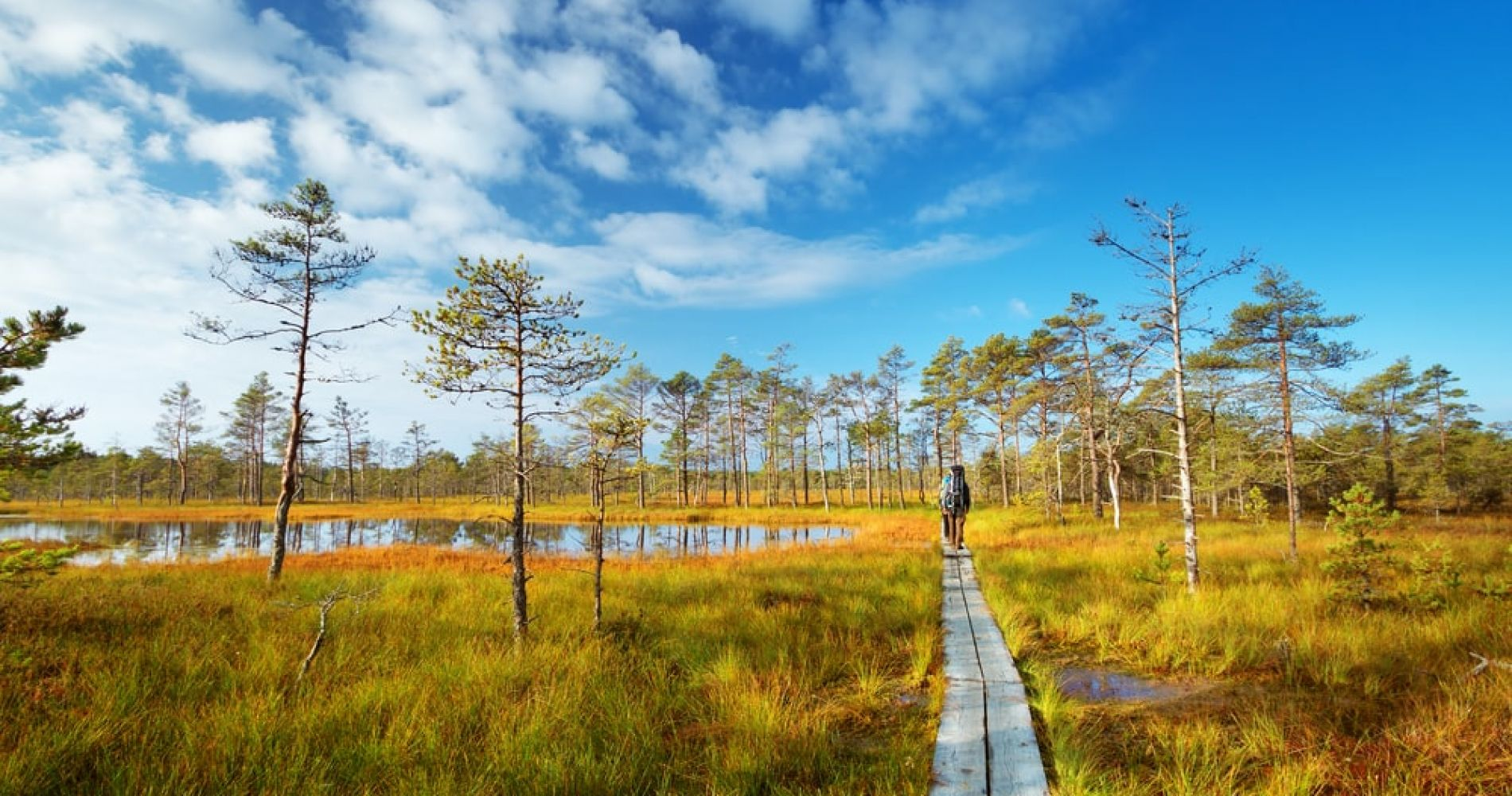Visit Lahemaa National Park in Estonia from Tallinn