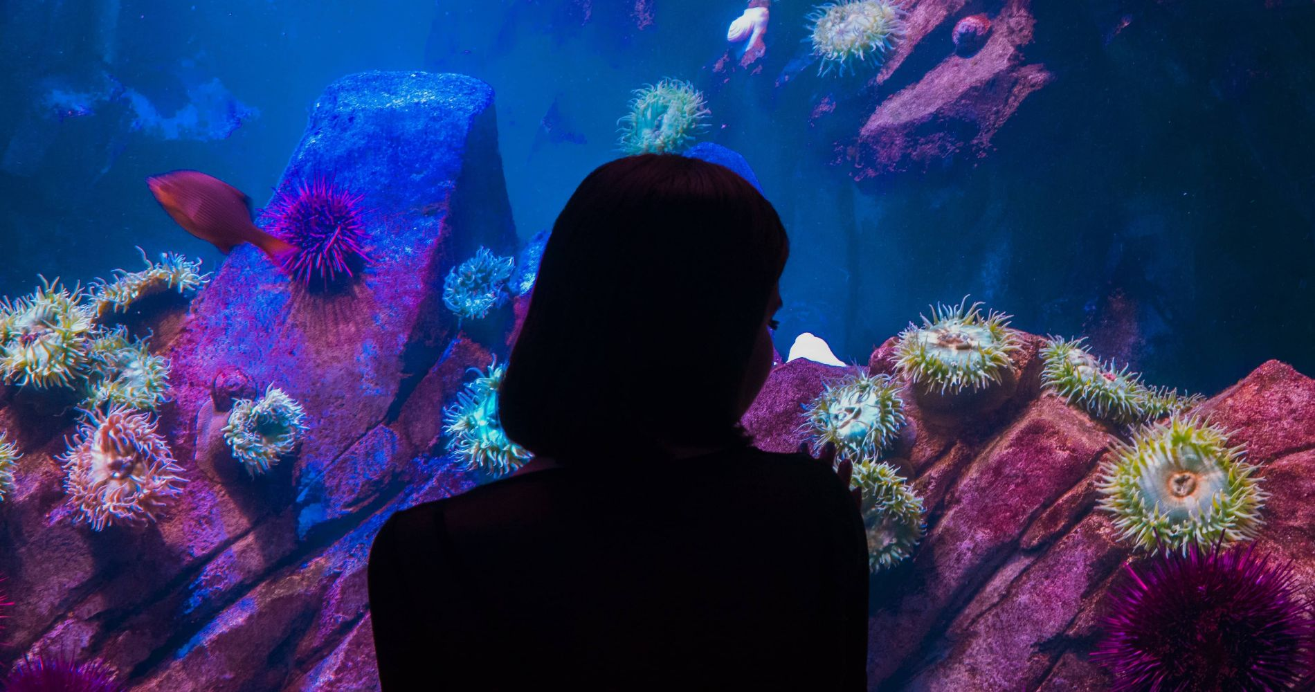 Adventure Aquarium and other attractions in Philadelphia for Two