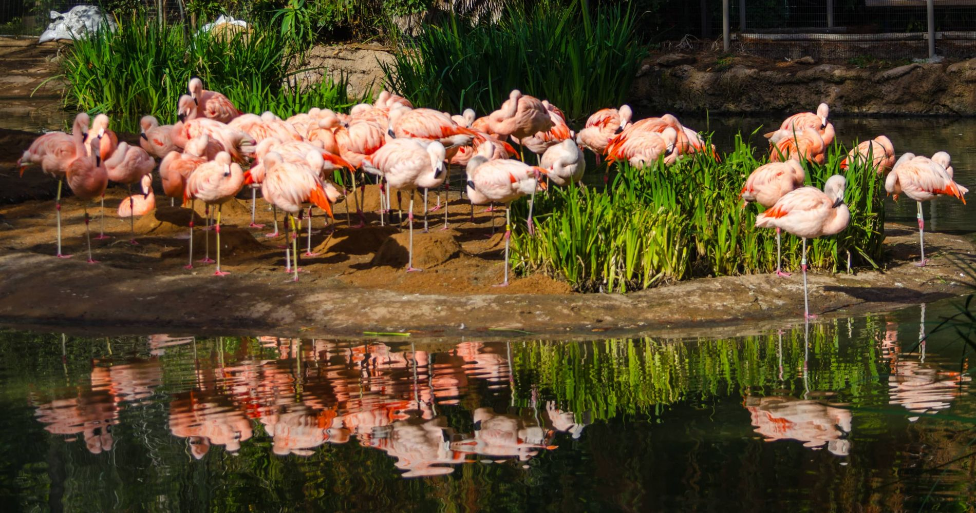 San Diego Zoo Safari Park and other California attractions