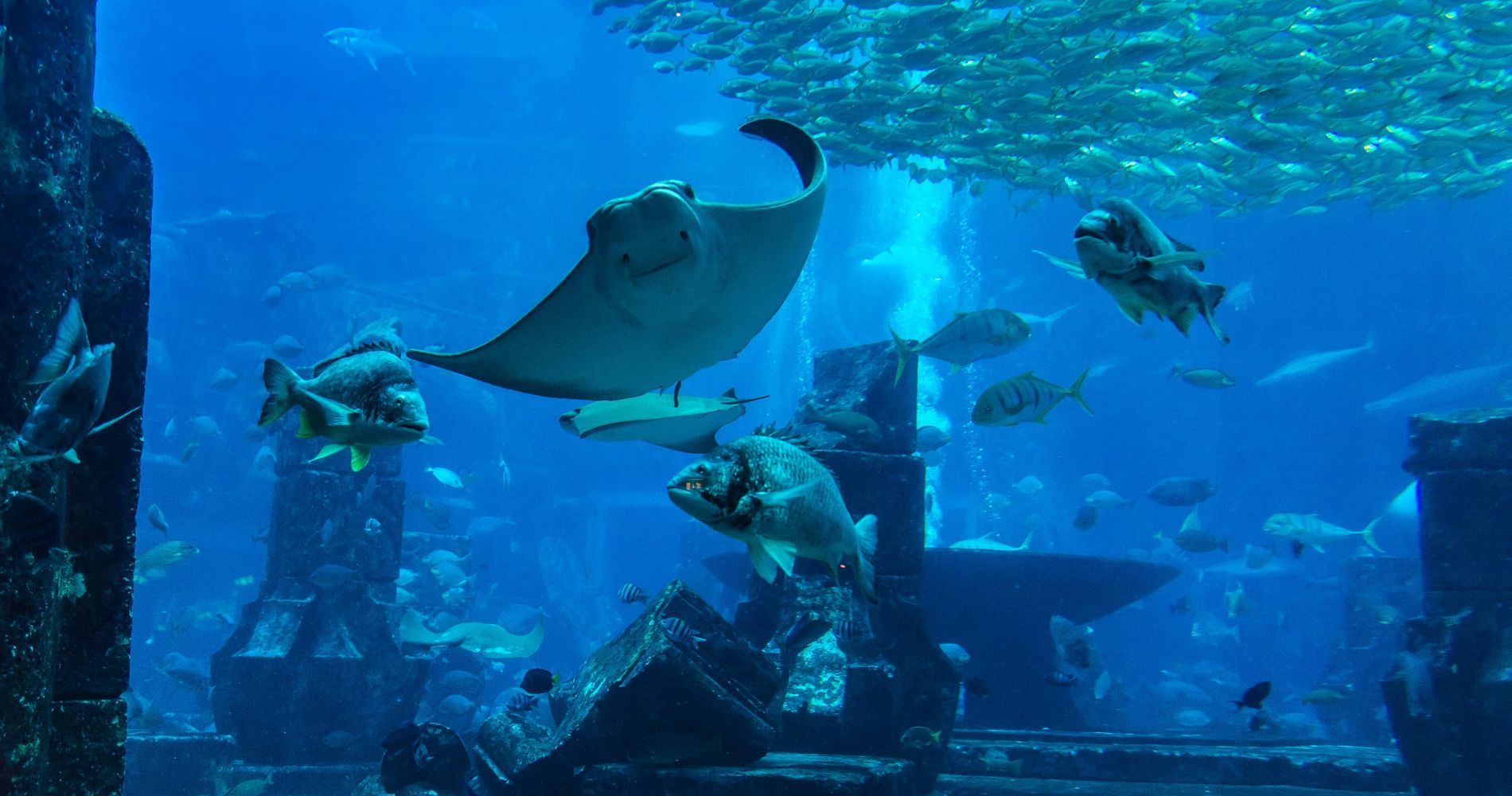 Dubai Aquarium & Underwater Zoo and other attractions