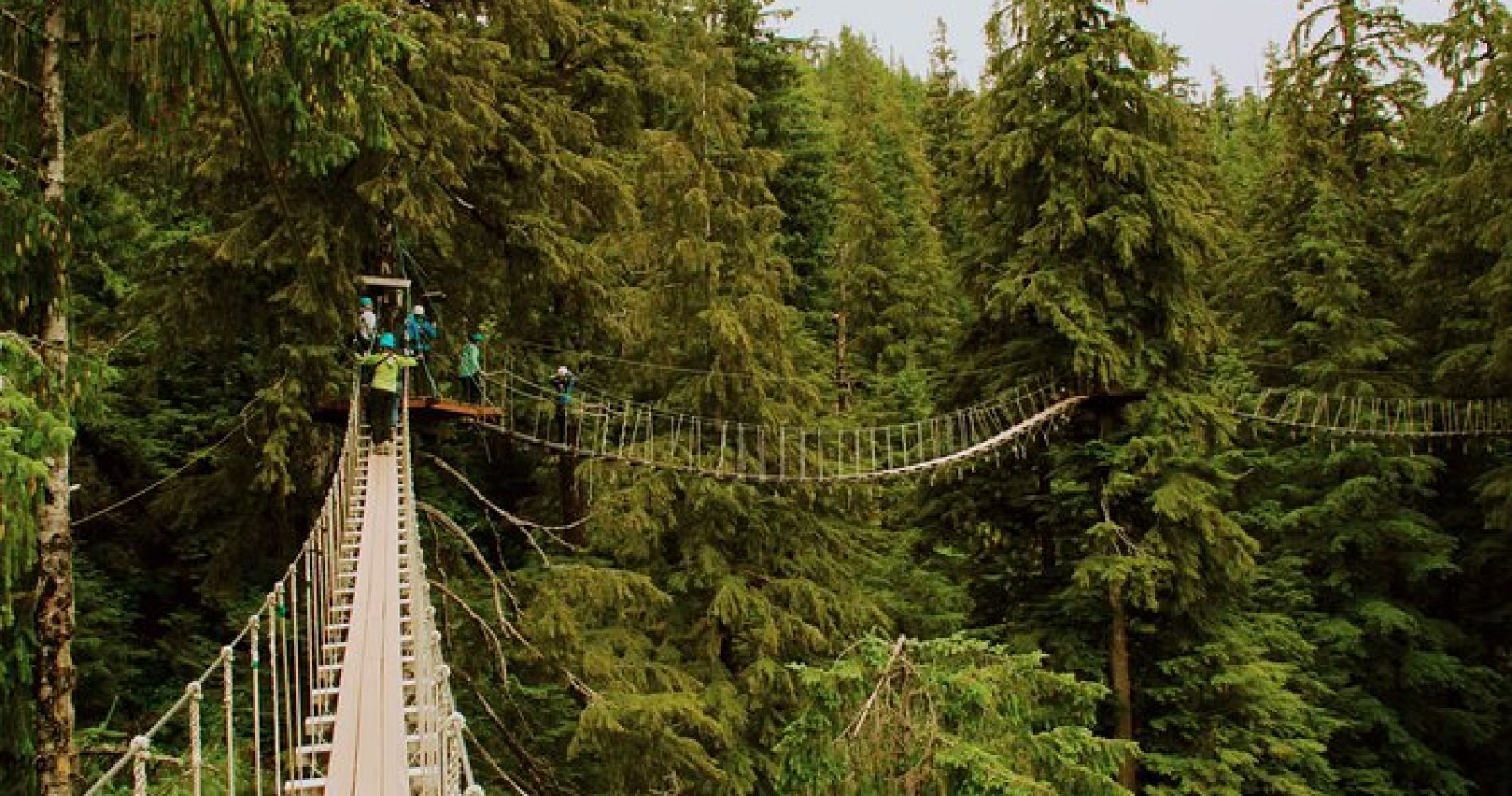 Rainforest Zip, Skybridge & Rappel Adventure in Ketchikan, AK