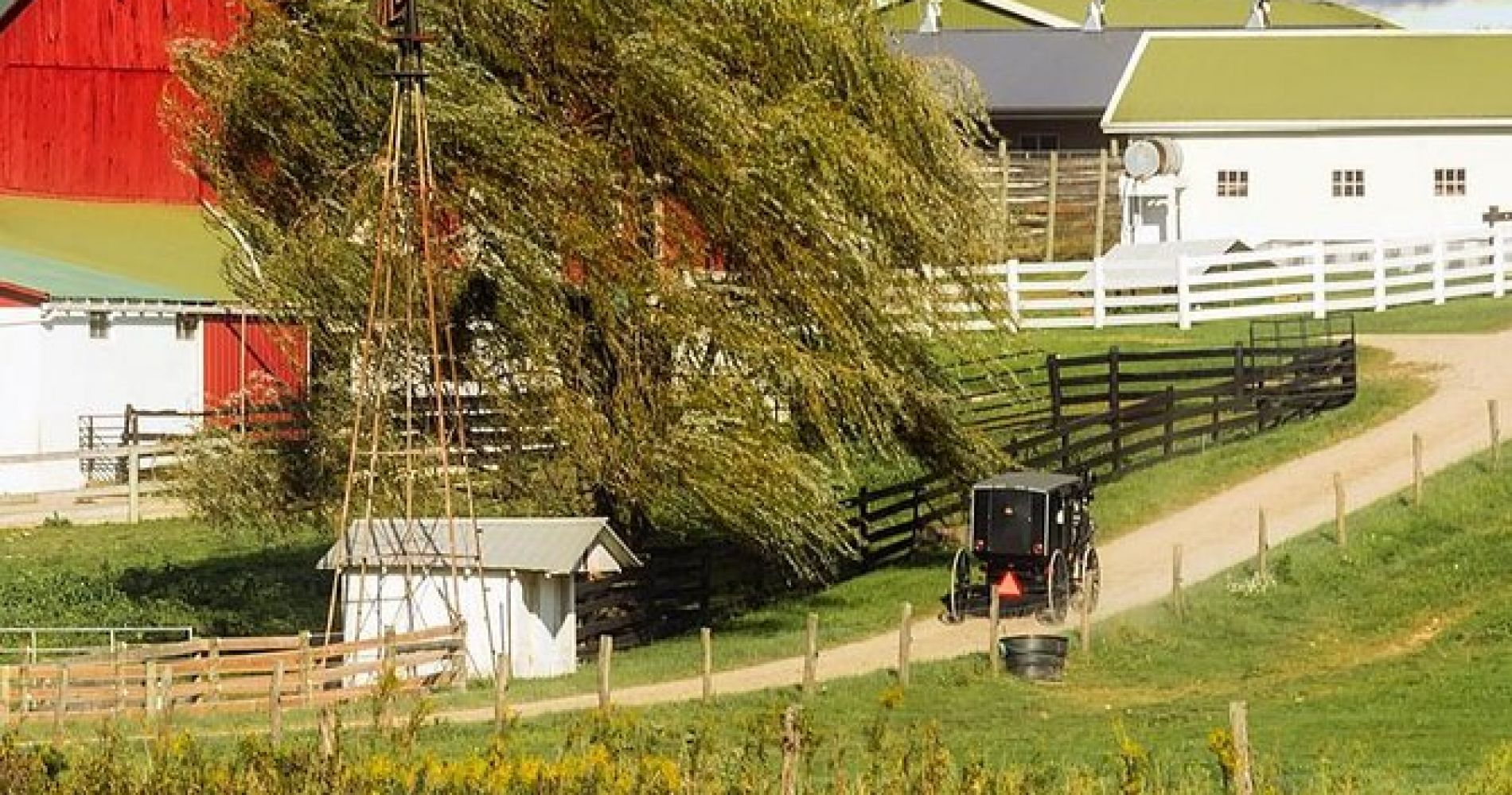 Amish Experience Visit-In-Person Tour