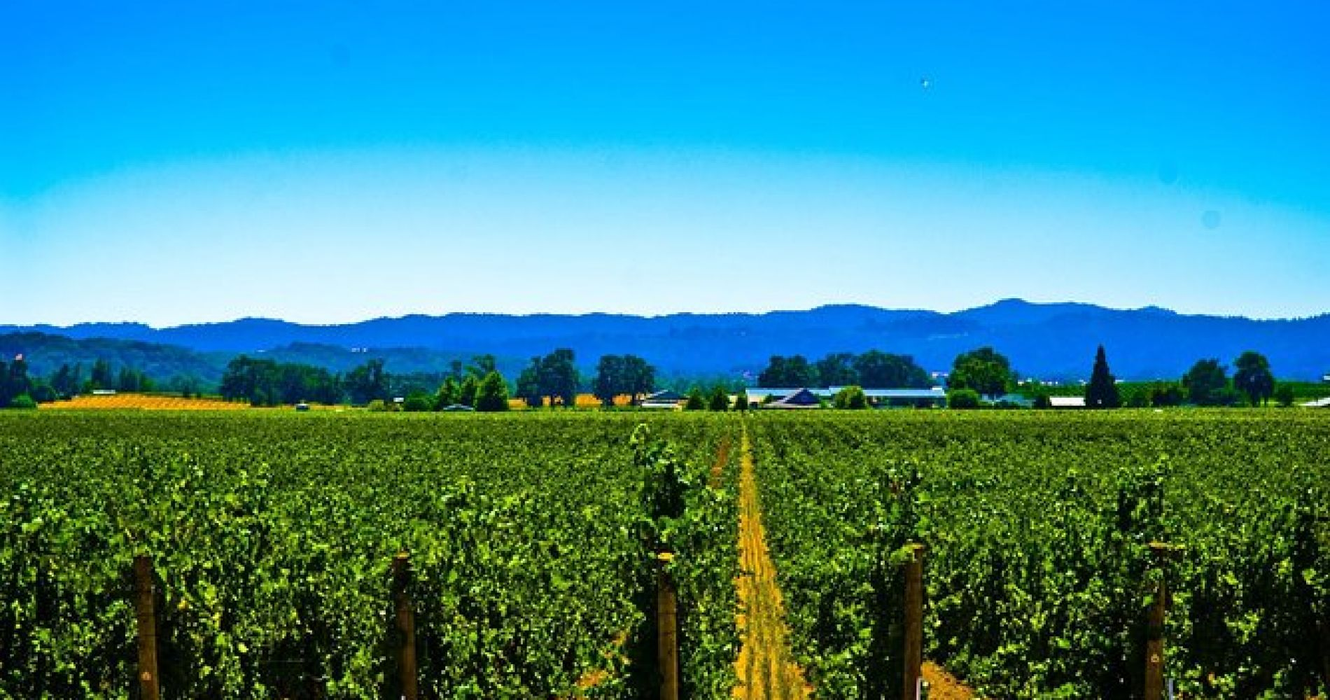 El Dorado Wine Country Tour from South Lake Tahoe