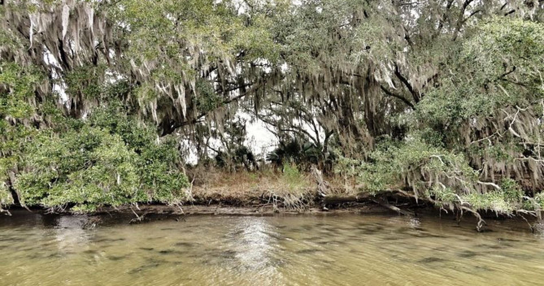 Ultimate Swamp Tour Experience from New Orleans