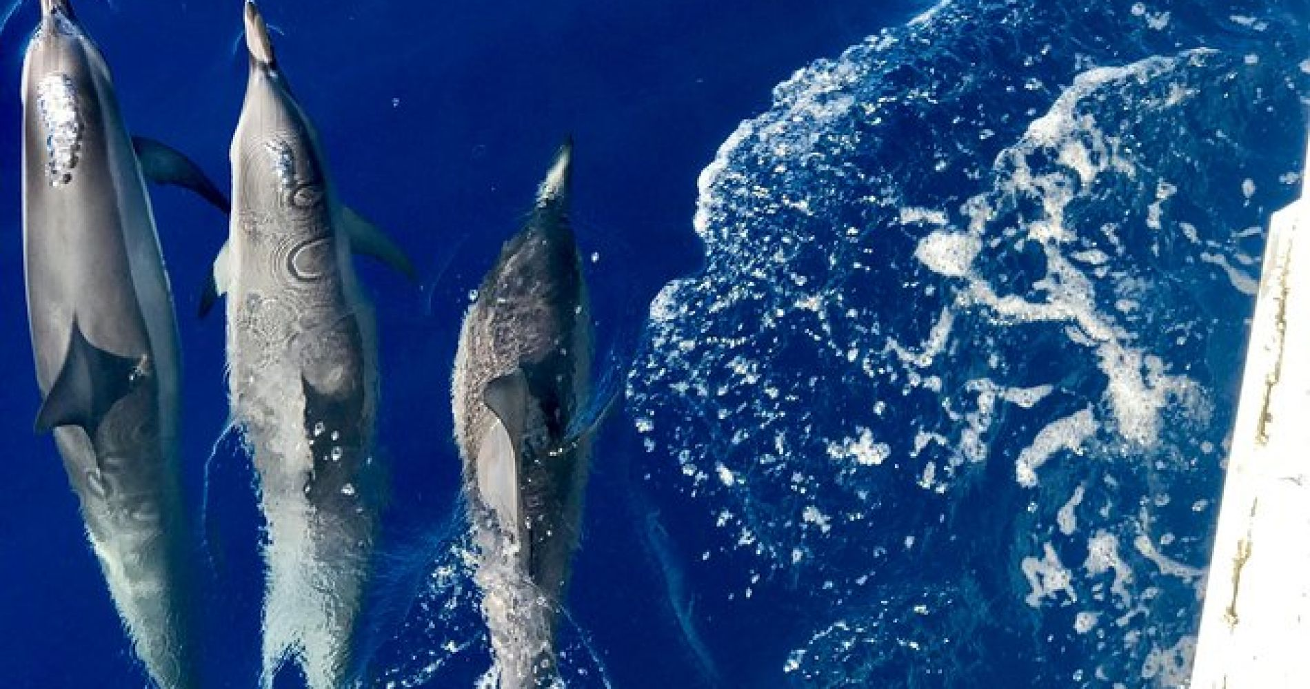 Dolphin and Snorkel Adventure from Lahaina to Lanai